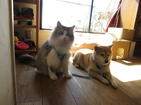 犬猫日和16 のコピー