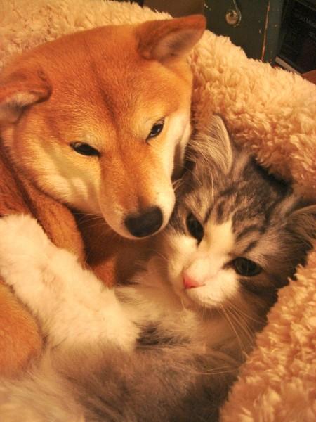 犬猫日和6 のコピー